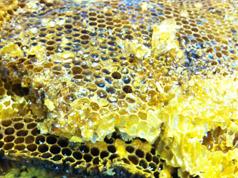 本品は、古代より土着種であるニホンミツバチより集蜜されました純天然蜜でございます。 蜜源は、山に自生している落葉樹より集めてまいります。 人の介入を蜂が嫌うため、一年に一度しか集蜜出来ず、貯蜜量も少なくとても貴重な蜂蜜です。